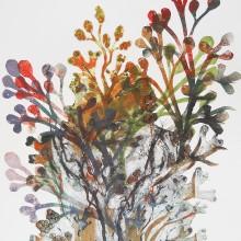 Seaweed : Collagraph + Monoprint : Annabelle Deutsch